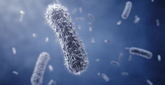 Bacteria are prokaryotes, which consist of a single cell with a simple internal structure